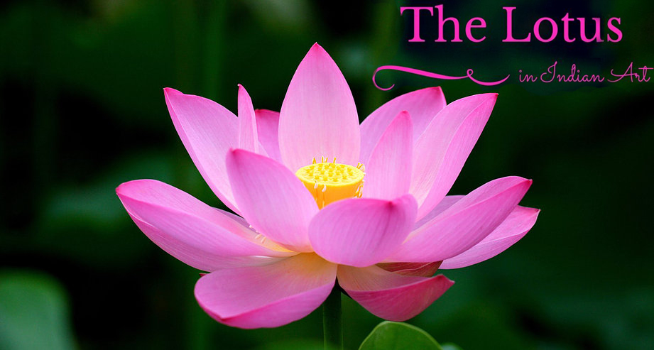 The lotus in indian art mystery of india mightylinksfo